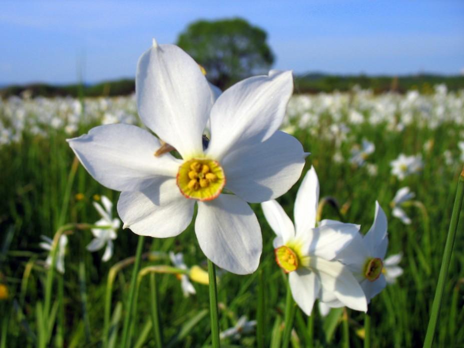 """""""Весняні фарби Закарпаття + Нарциси"""" (3 дні)"""