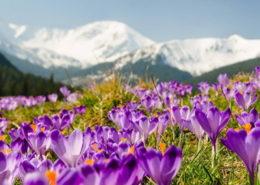 «Весняна Гуцульщина» (3 дні)